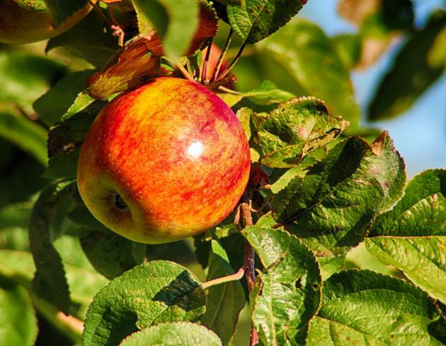 Pardies Apfel